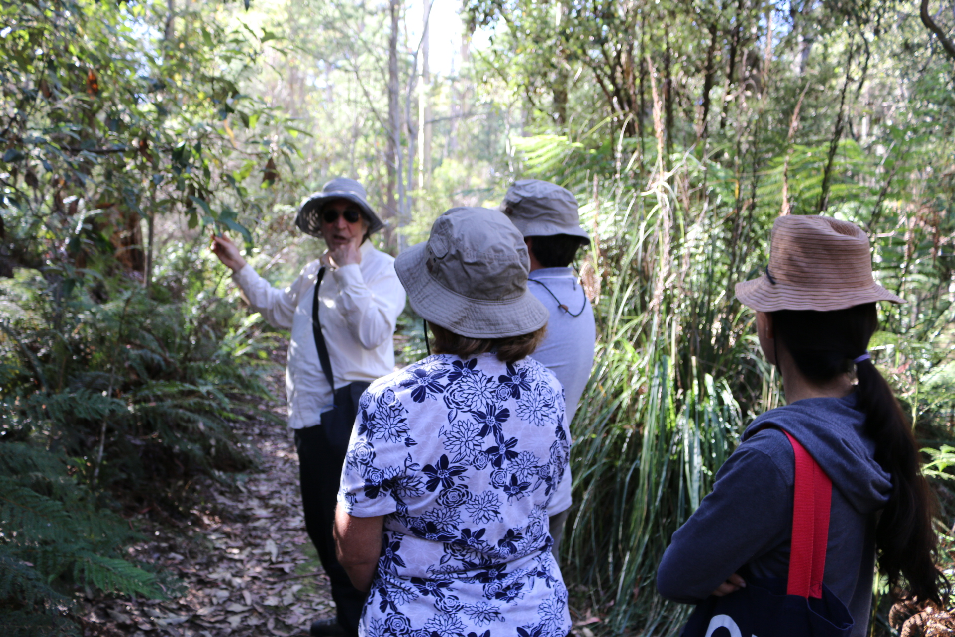 A walk in the forest with Sean Cadman, Great Western Tiers Forest Walks, Short Walks Tasmania