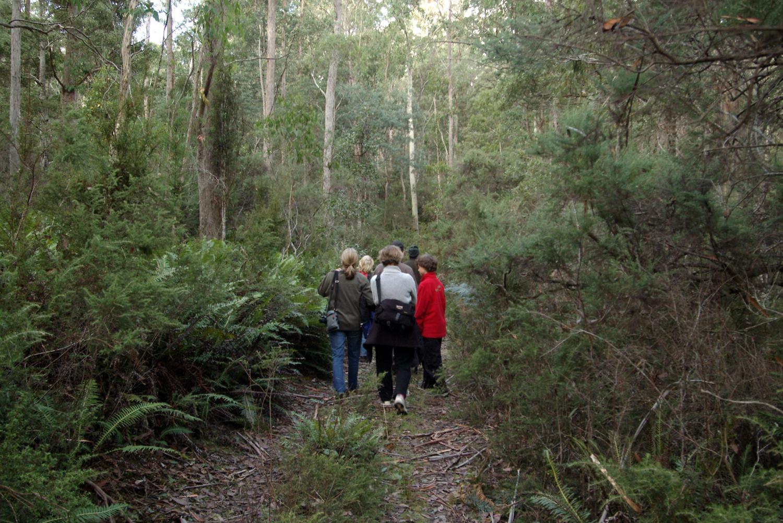 Guided Day forest Walk Deloraine Tasmanua
