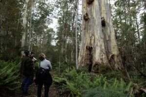 Forest Walks Lodge - eco Accommodation and guided walks Deloraine Tasmania