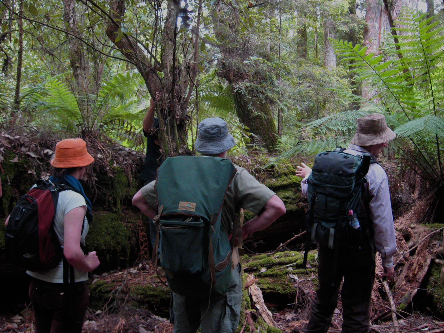 Forest Walks Lodge eco Accommodation Deloraine Tas