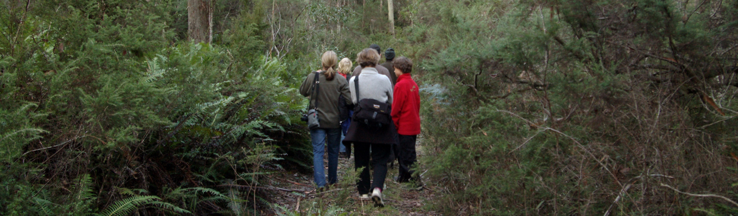 Forest Walks Lodge - guided walks in Tasmania Great Western Tiers in northern Tasmania. Plant and bird identification