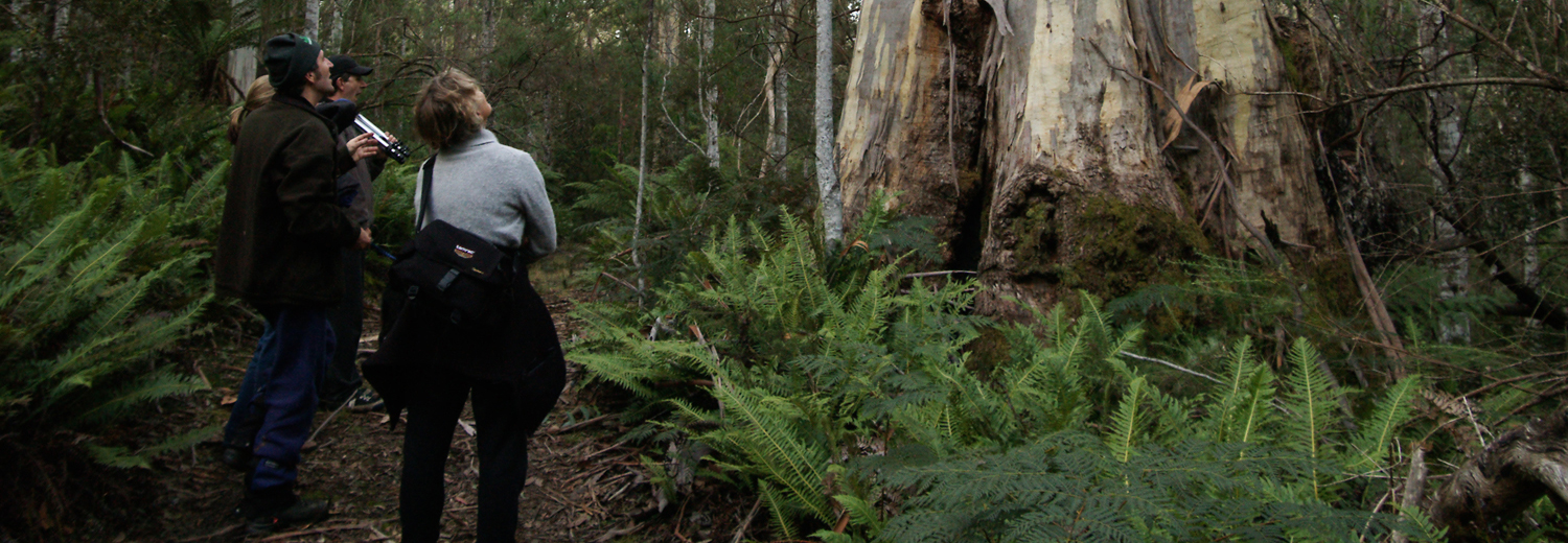 Guided Forest walks Deloraine Tasmania