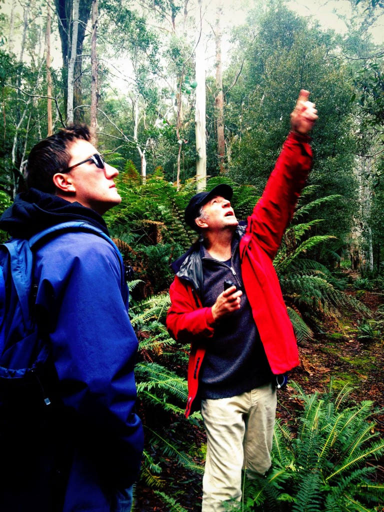 Guided bush walks tasmania