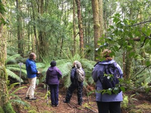 Forest Walks Lodge - guided forest walks on the Great Western Tiers