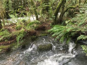 Forest Walks Lodge - rainforest, Great WEstern Tiers, Northern Tasmania, short walks, rainforest walk